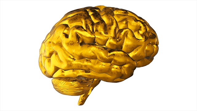 brain, stress, nervous system